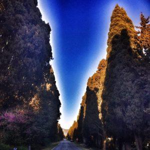 Filare dei Pioppi che porta a Bolgheri
